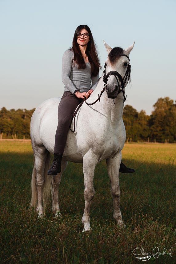 photo de cheval au couché de soleil en Alsace